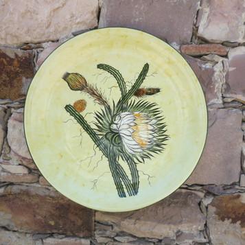Aloes y Philocactus n°10