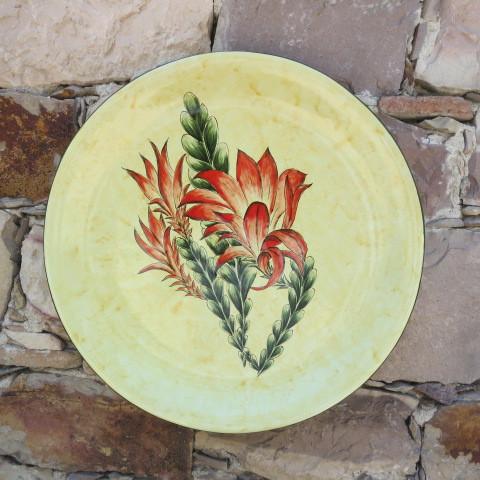 Aloes y Philocactus n°11