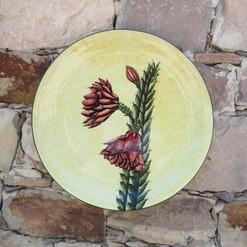 Aloes y Philocactus n°5
