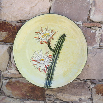 Aloes y Philocactus n°6