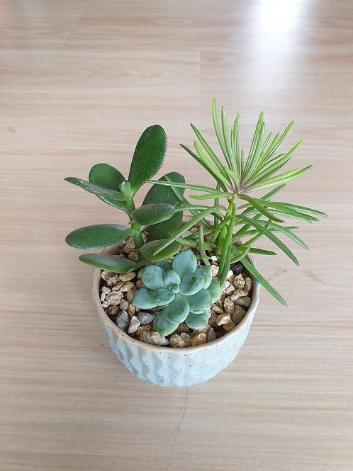 Tiny Green Thumb Succulent - Monicatandog