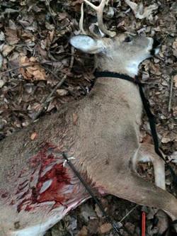 2 deer with same head