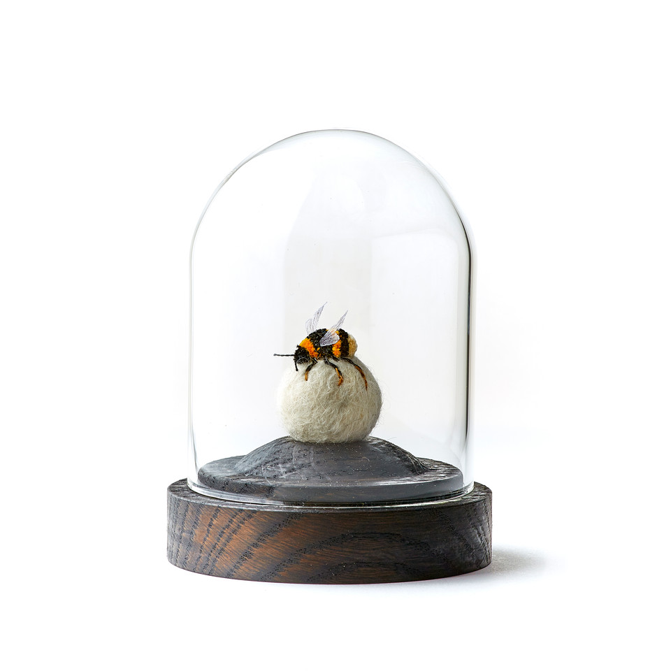 Bumble Bee in Glass Dome