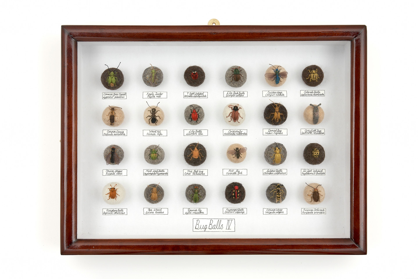 'Bug Balls IV', 2010