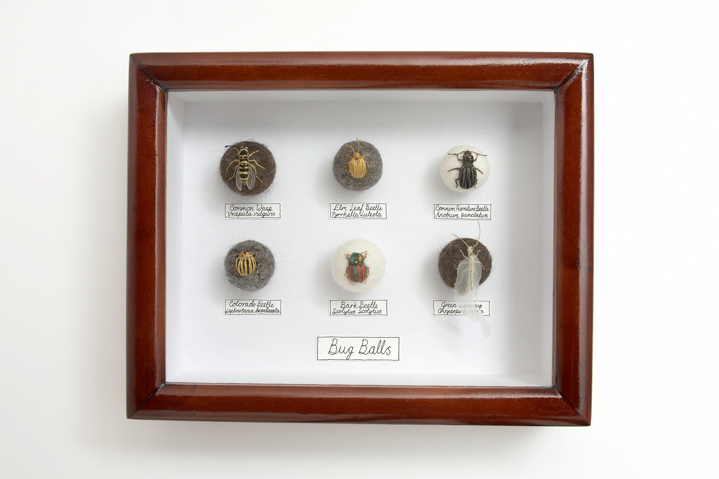 Six Bug Ball Collection