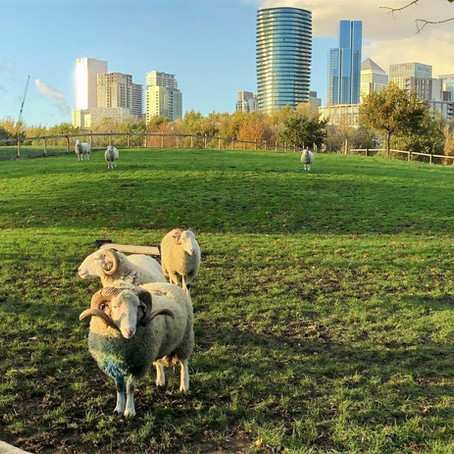 Mudchute Park & Farm x PAAWstival 2021
