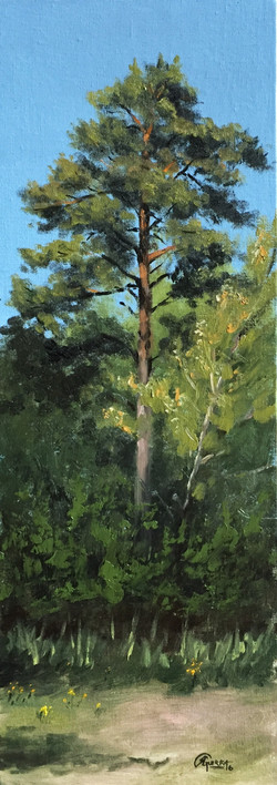 Study of a Pine Tree in Early Spring, Rafael Guerra Painting Pintura