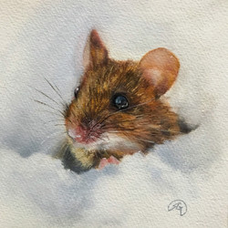 Finnish Forest Mouse