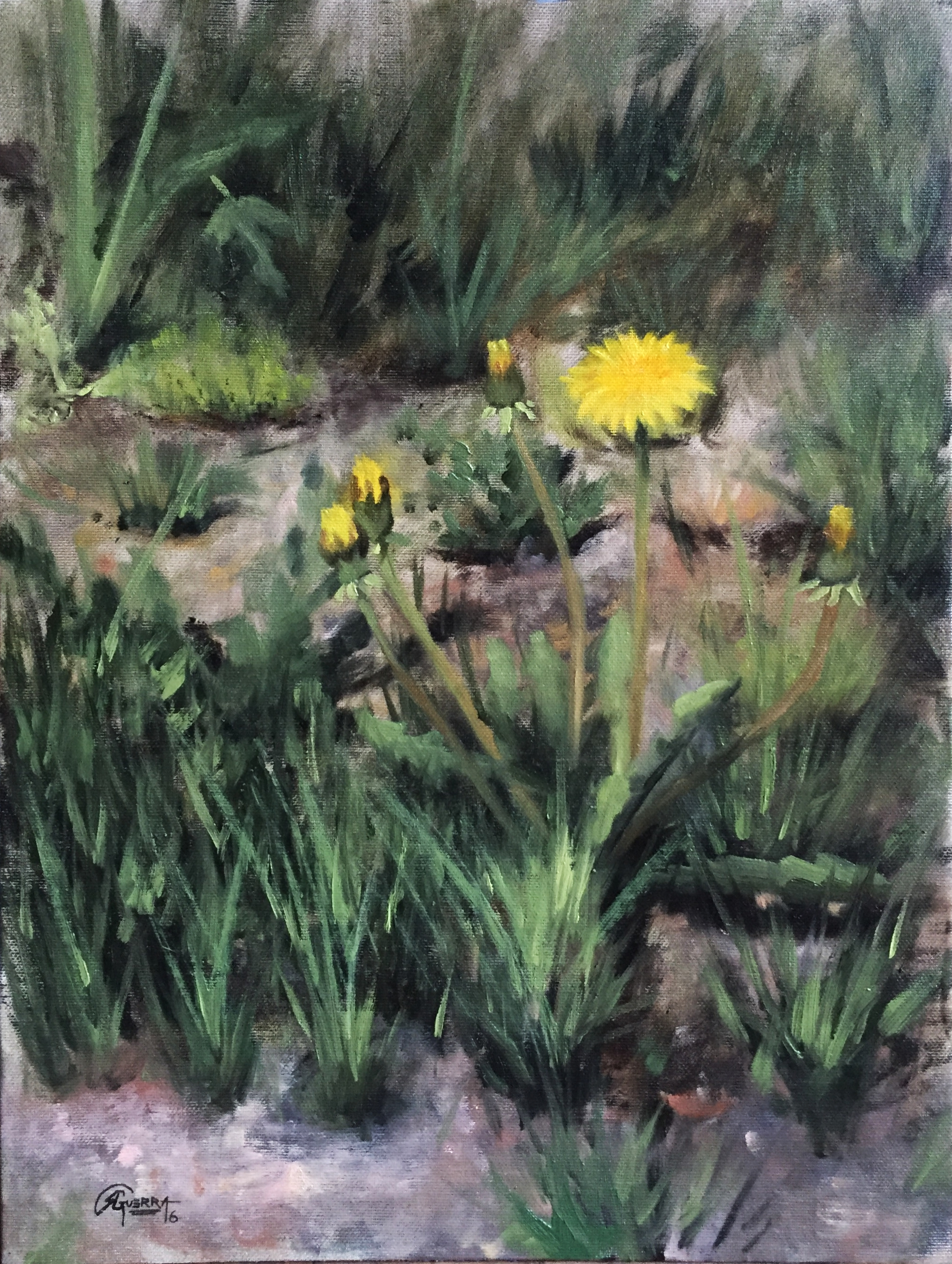 Study of Dandelion Flowers