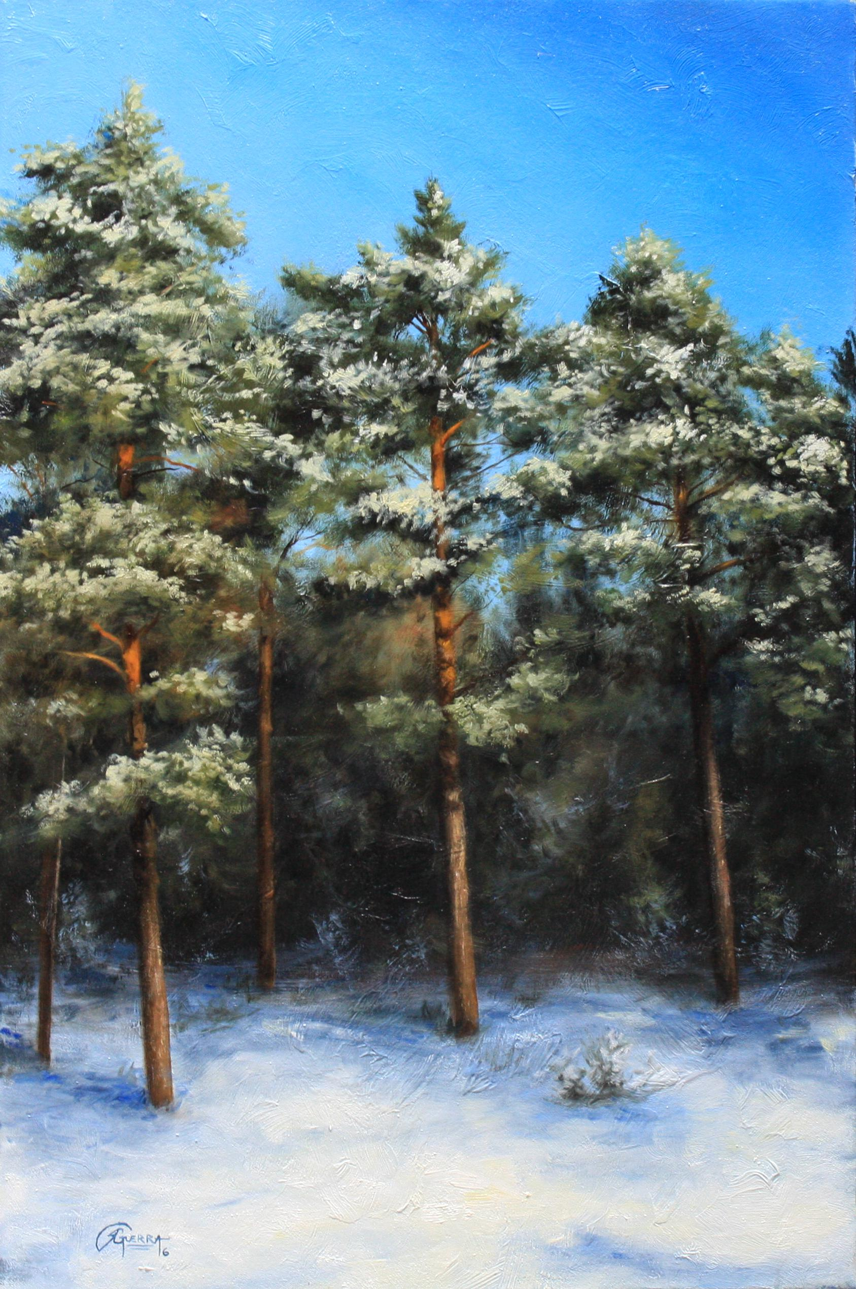 Finnish Pine Trees in Winter