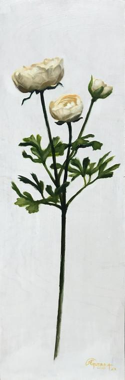 White Ranunculus, Rafael Guerra Painting Pintura