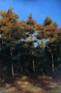 Finnish Pine Trees in Autumn, Rafael Guerra Painting