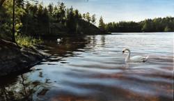 Cisnes em um Lago na Finlândia Durante o Verão 1, Rafael Guerra Painting Pintura