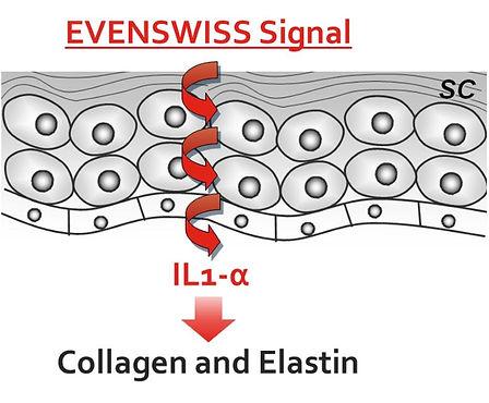 Evenswiss Signal1.jpg