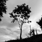 SERIEGRAFICA16.png