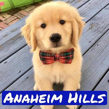 Anaheim Hills Golden.jpg
