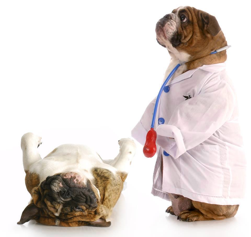Vet Care Vaccine Dogs
