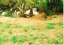 Site Before 016