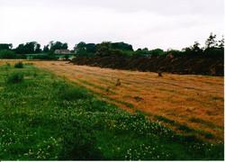 Meadow Creation 07 - Copy