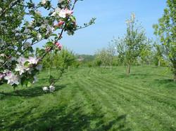 blossom 05 0507.jpg