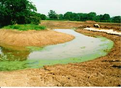 Pond Creation 13