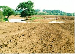 Pond Creation 15