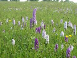 meadow 03 0608.jpg
