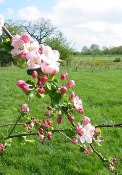 blossom2.jpg