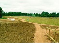 Seeding the Meadows 13