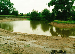 Completed Pond 11