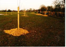 Orchard Creation 10