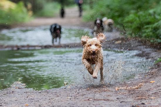 Dog walking parks