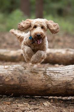 Dog fun in the sun