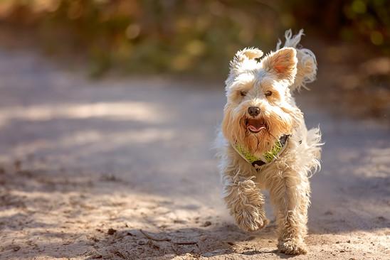 Solo dog walks