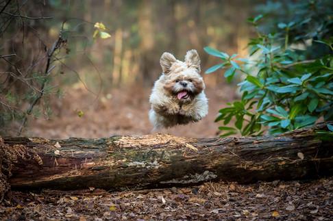 Off lead dog walks