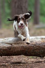 Woodland dog waks