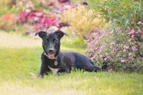 Finchampsted Dog Walks