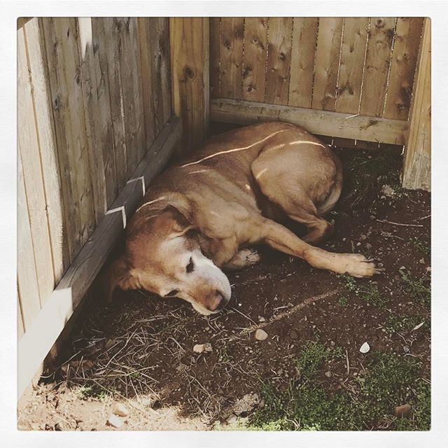 Dug a perfect hole for napping.