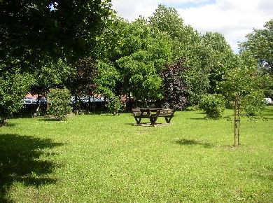 URGENT APPEAL - MEMORIAL TREES