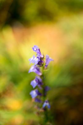 queensbotanicalgarden.jpg