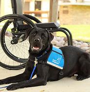 IMG_6678 PT dog wheelchair.jfif