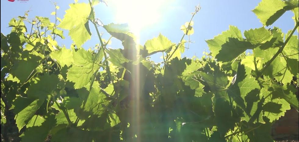 Les vignerons vous accueillent