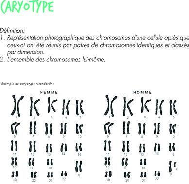 caryotypeex.jpg