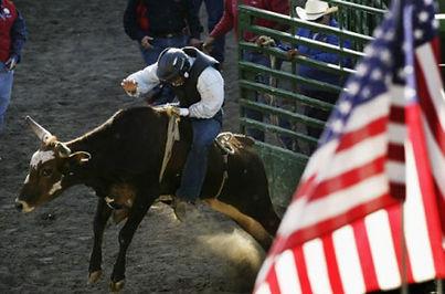 Steer-Riding.jpg