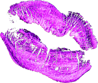 Pink-Lips.png