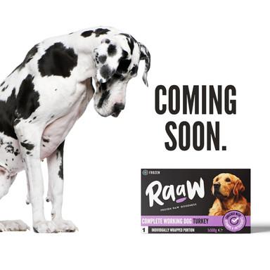 coming soon turkey - dog v1.2.jpg