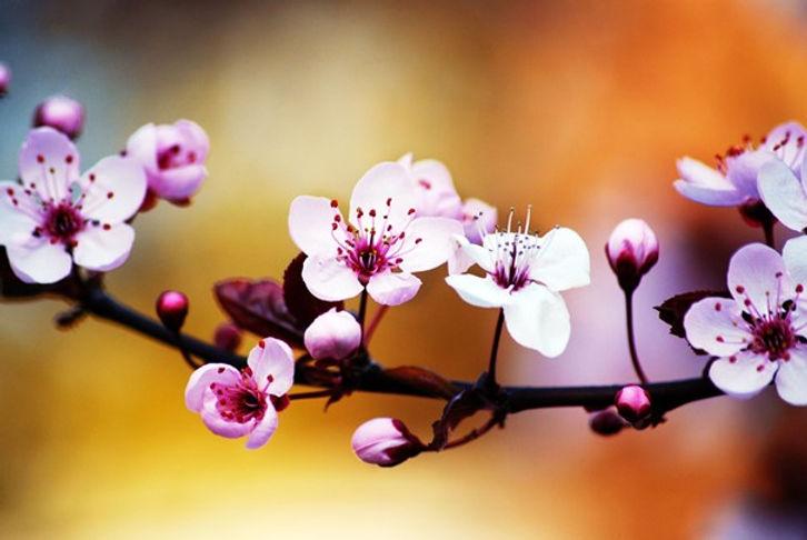 bloemen_memoriam_2.jpg