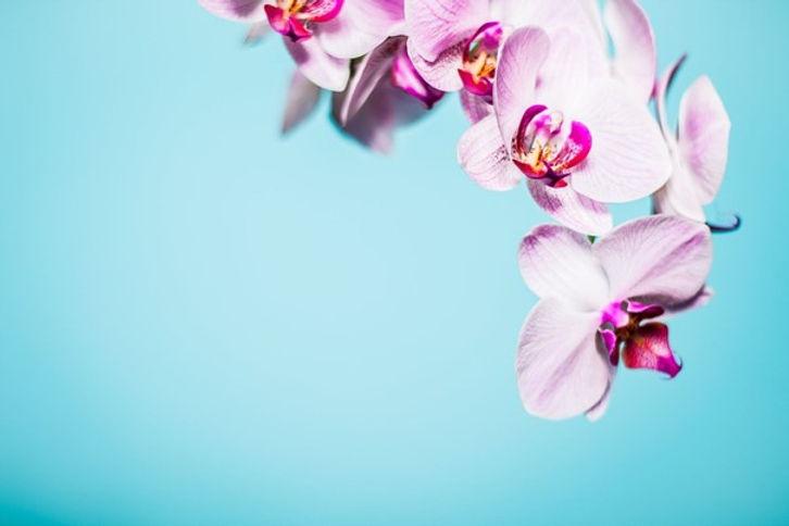 bloemen_memoriam_1.jpg