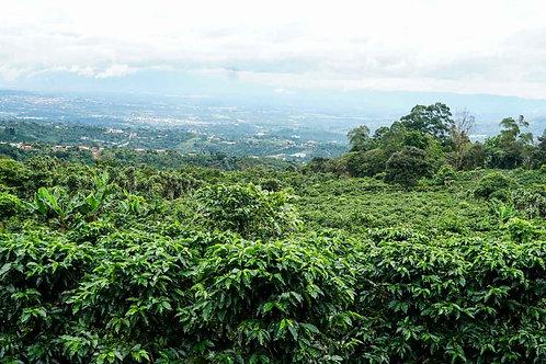Brazil - Fazenda Morro Feio Natural