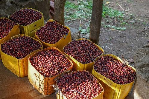 Ethiopia - Tega & Tula Farm Grade 1